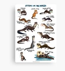 Otters of the World Canvas Print
