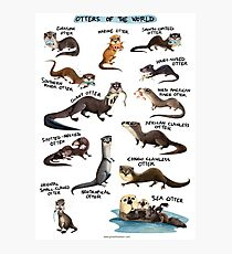 Otters of the World Photographic Print