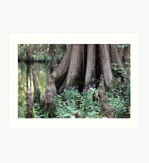 Cypress Tree & Wildflowers Art Print