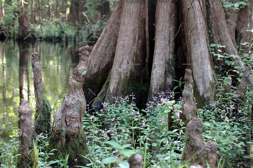 Cypress Tree & Wildflowers by Stacey Lynn Payne