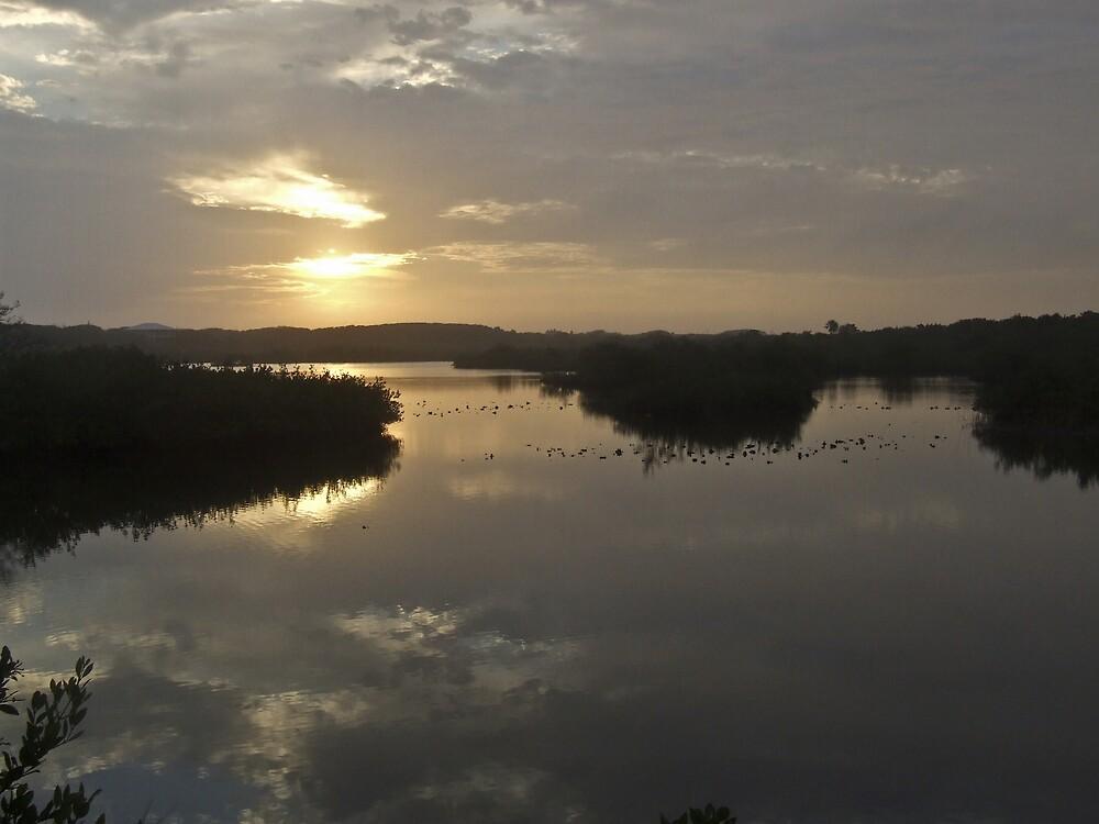 Florida Wetland Sunrise by Shadowfax