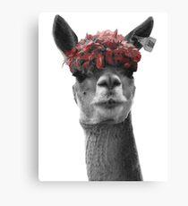 Red Headed Llama Canvas Print