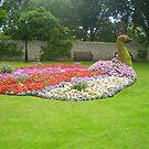 peacock garden by brucemlong