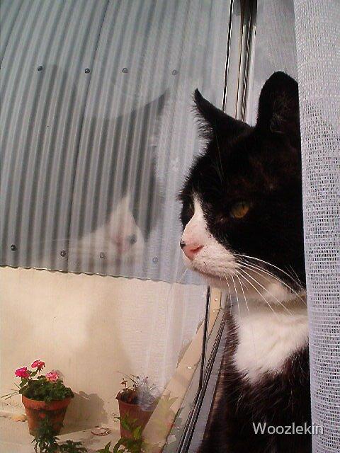 Thomas Cat, orkney by Woozlekin