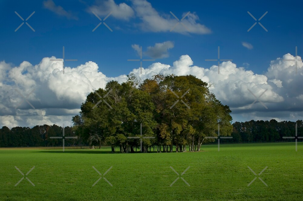 Trees in Field by Stacey Lynn Payne