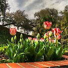 Tulips at Brookgreen Gardens by TJ Baccari Photography