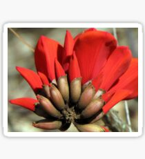 "Erythrina caffra ~ ""Coast Coral Tree"" Sticker"