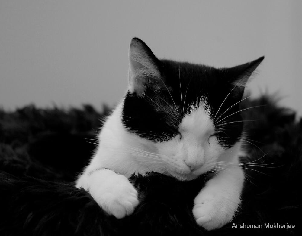 Sleeping Cat 1 by Anshuman Mukherjee