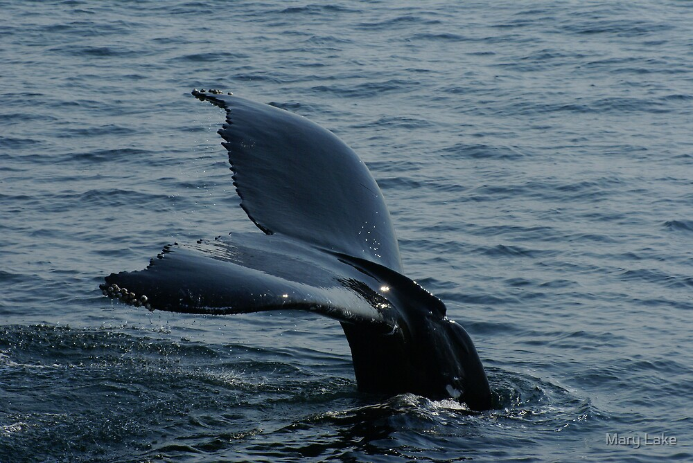 Whales Tale by Mary Lake
