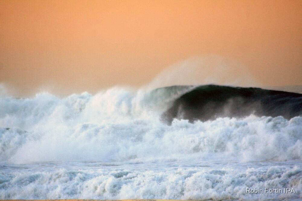 Sunrise Surf by Robin Fortin IPA
