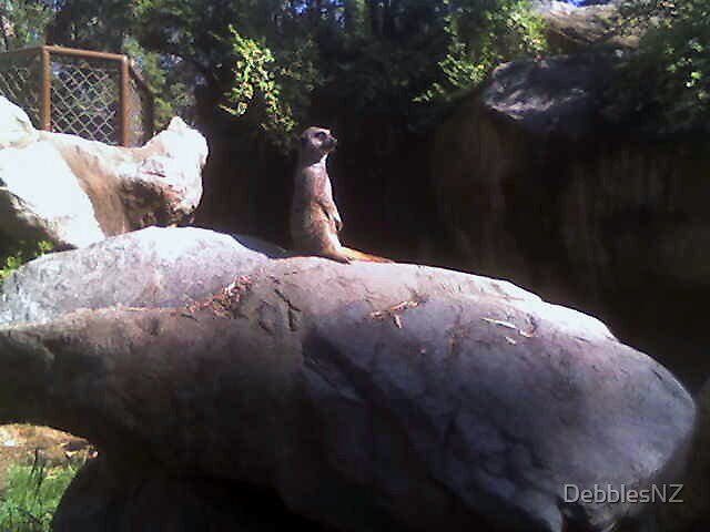 Meerkat at L.A Zoo by DebblesNZ