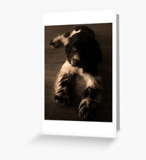Cocker Spaniel Greeting Card