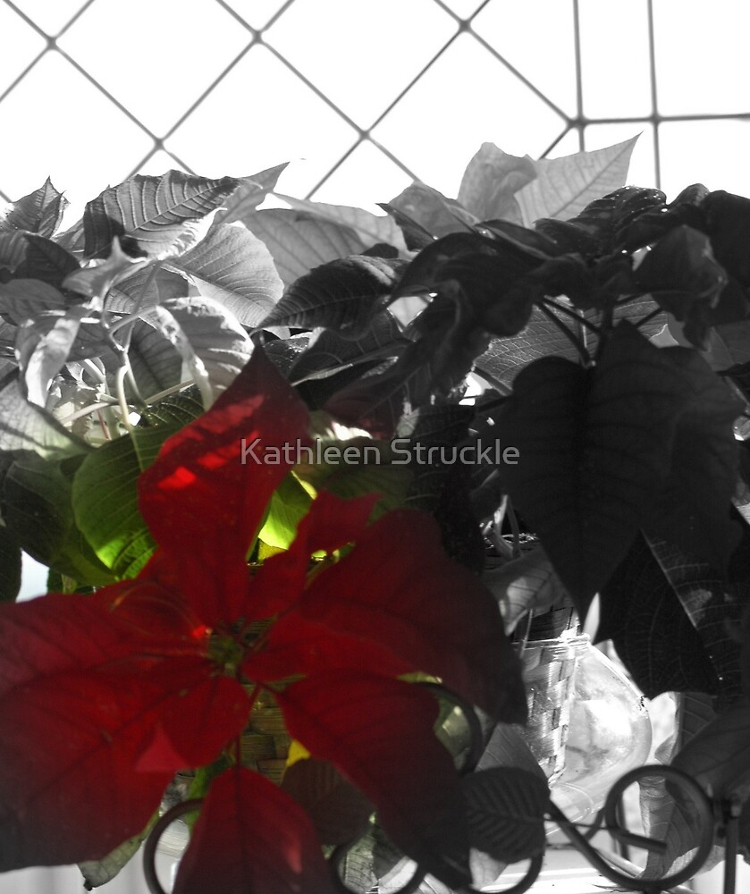 One Red by Kathleen Struckle