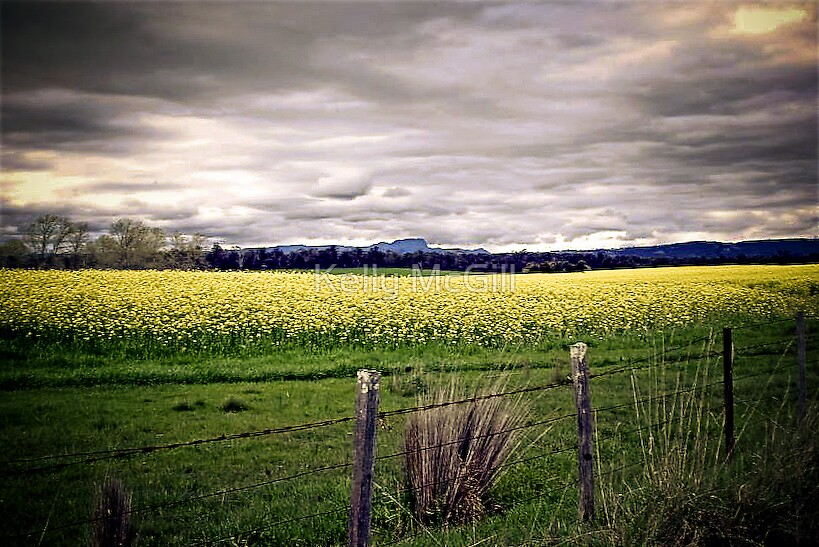 Canola, Campbell Town by Kelly McGill