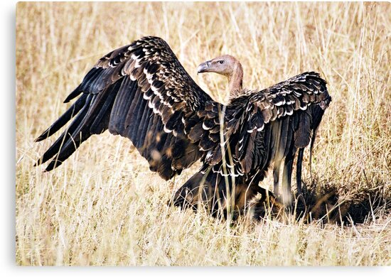 Flamboyant Vulture by JaneRia