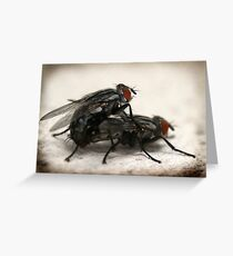 Porn Fly Greeting Card