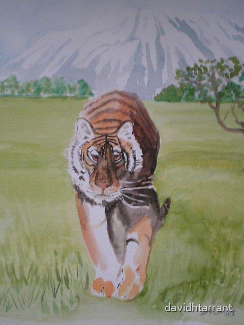 tiger feet by davidhtarrant