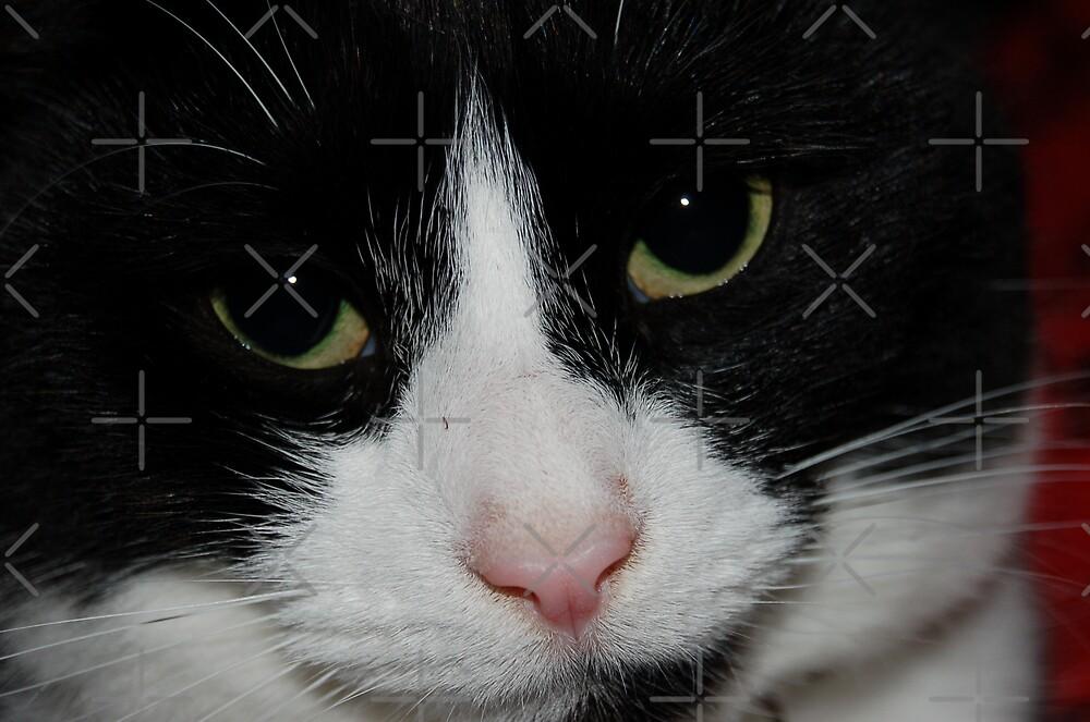 Binky Cat2 by ApeArt