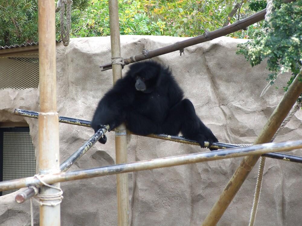 monkey by Lainey Simon