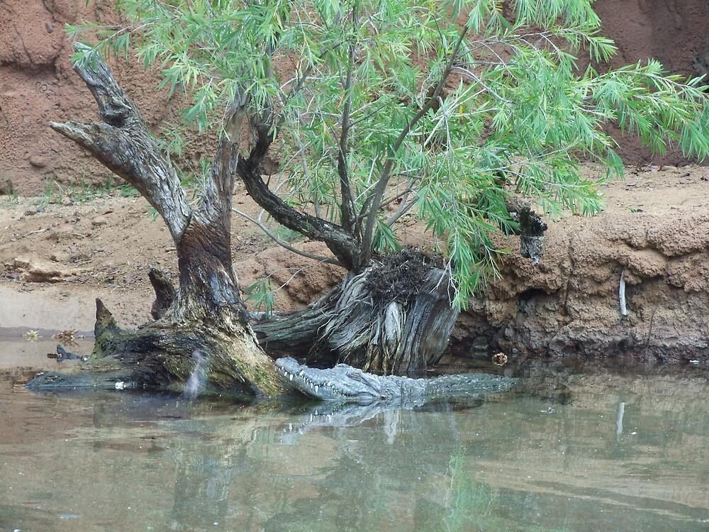 Crocodile by Lainey Simon