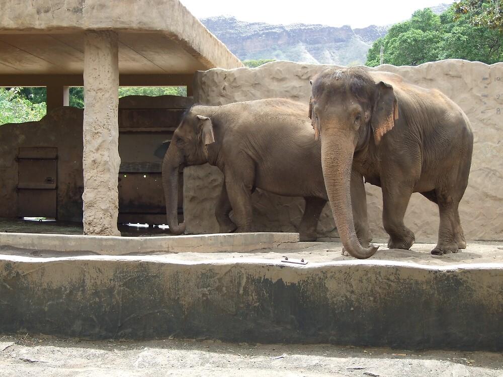 Elephant by Lainey Simon