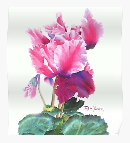Ruffled Cyclamen Watercolor Poster