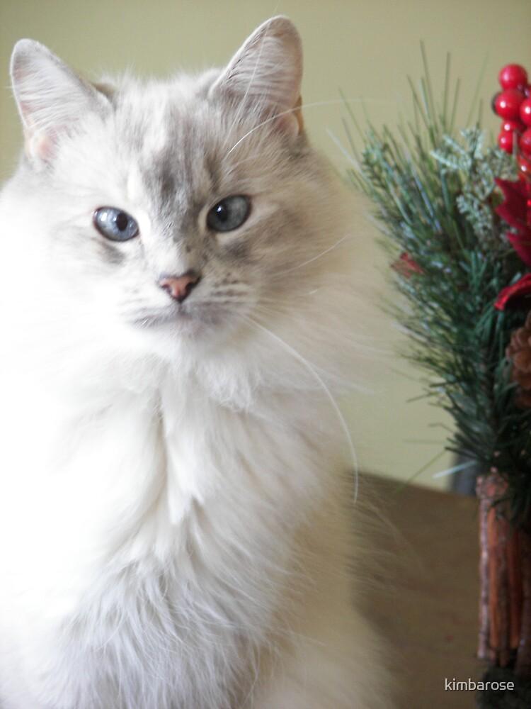 Christmas Kitty by kimbarose