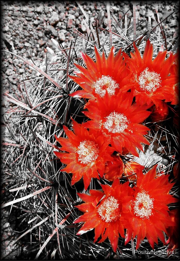 Burning Bed Of Blooms by PositivNegativs
