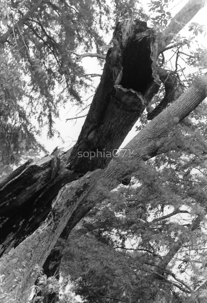 IF A TREE FALLS IN THE WOODS... by sophia071