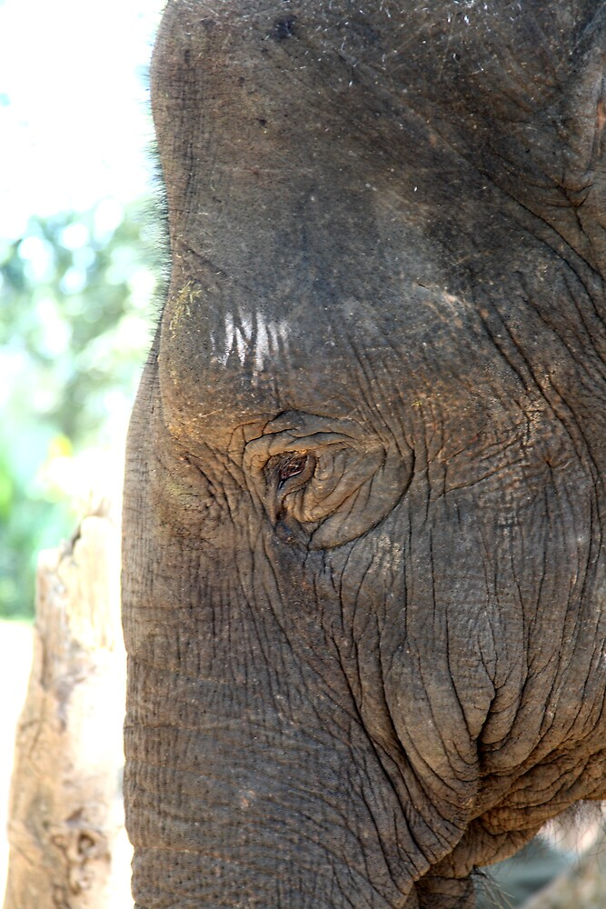 Wise old Elephant by anobleperson