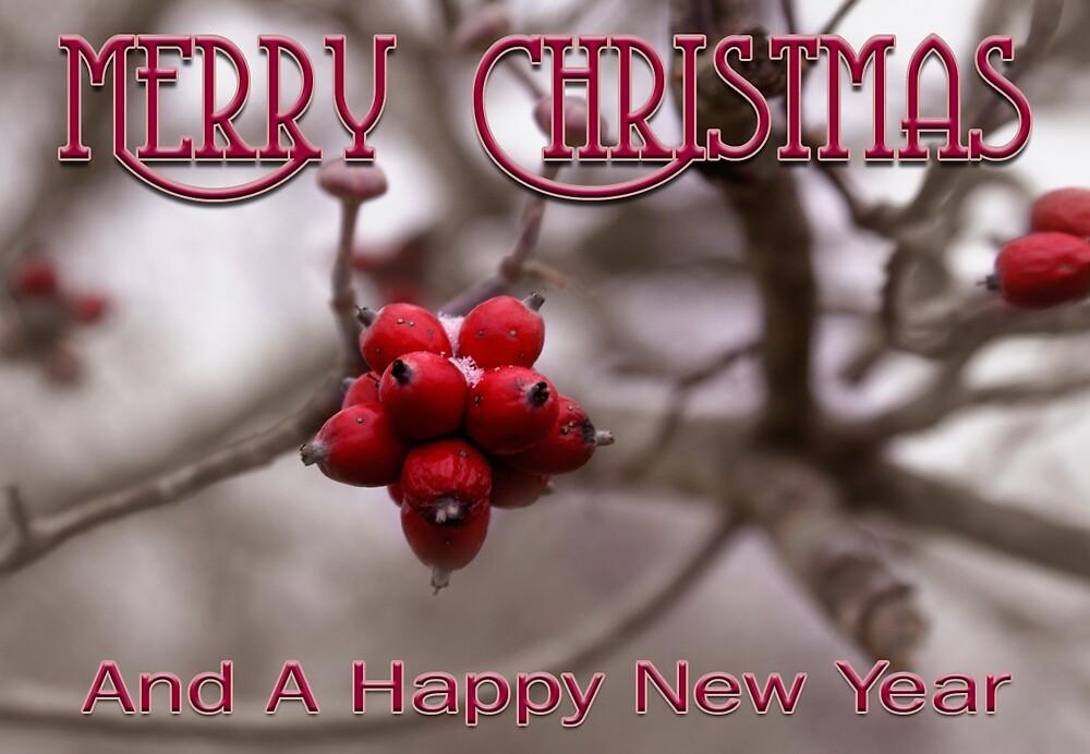 Merry Christmas Berries by Rod  Adams