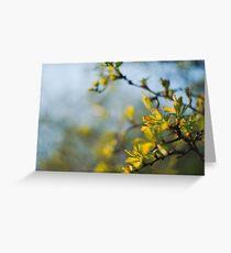 Fresh Sorbus Leaves Greeting Card