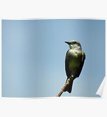 Perched Poster