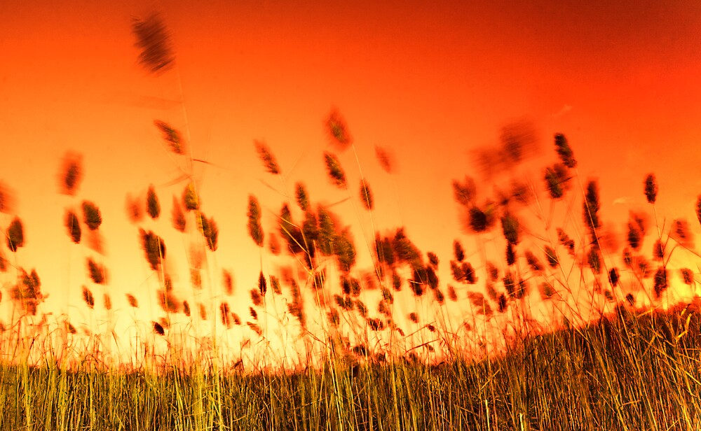 Ruby red sunset by Murtasma