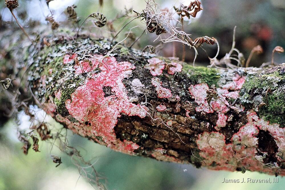 Moss by James J. Ravenel, III