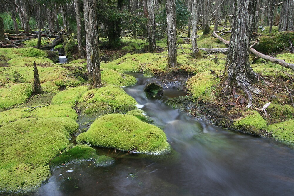 Meandering through moss by anobleperson
