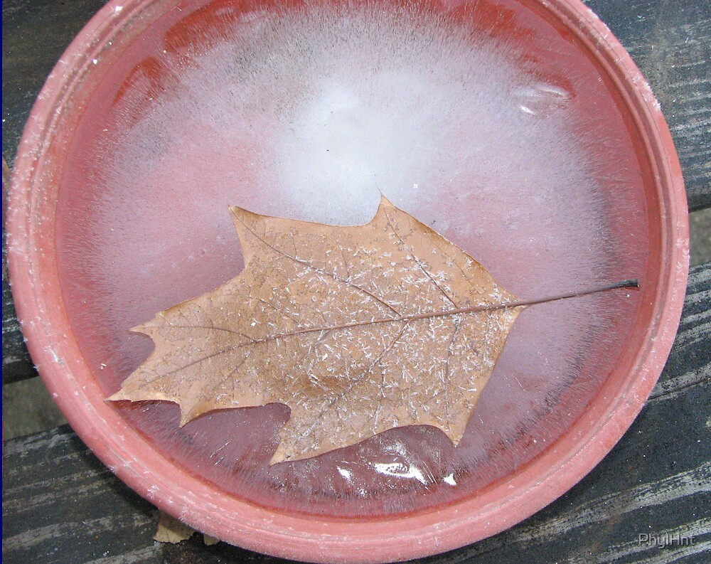 Leaf on ice by PhylHnt