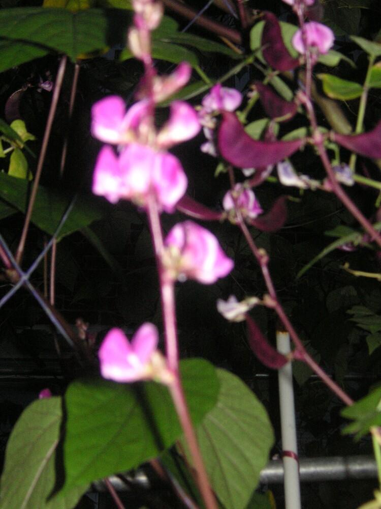 pea plant by hua622