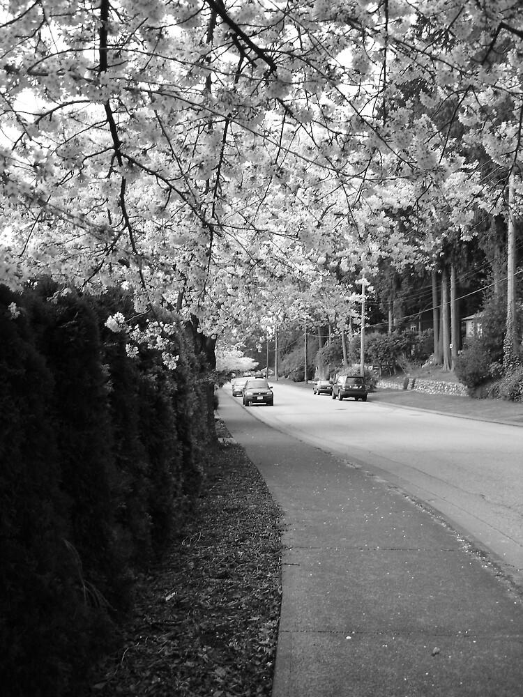 chery tree on the street by bradmilligan