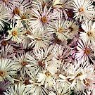 Flowers by malcblue