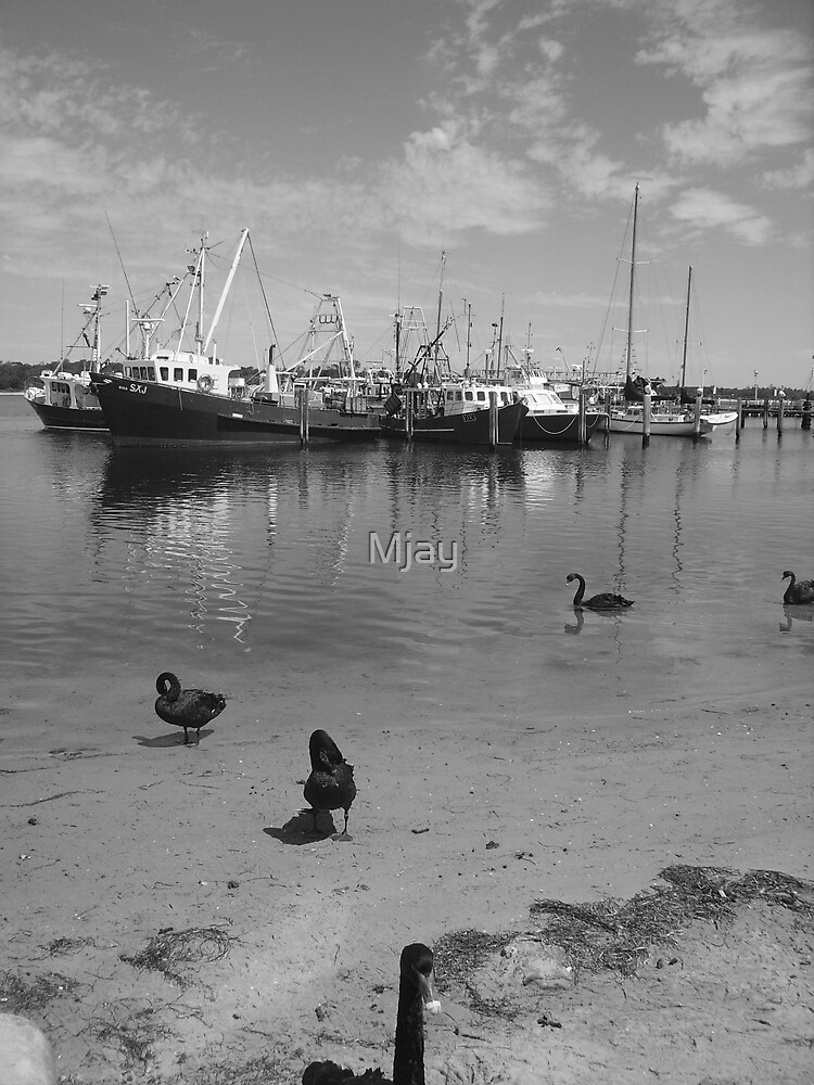 Black Swans by Mjay