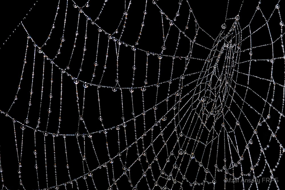 Rain Drops on Spider Web by Afzal Ansary FRPS
