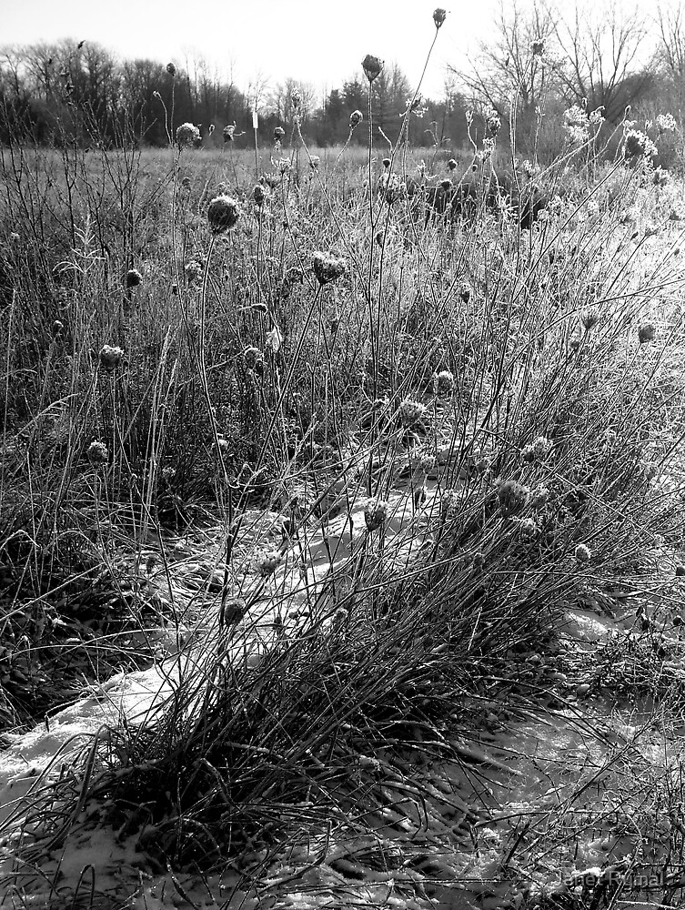 Frozen Winter Field by Janet Rymal