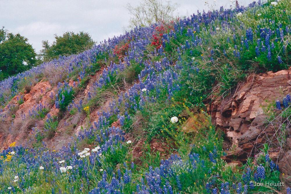 Bluebonnet Hill by Joe Hewitt