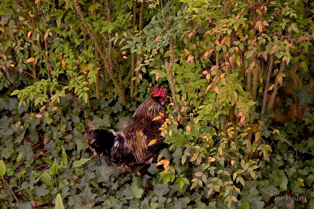 Rooster in Camo by Joe Hewitt