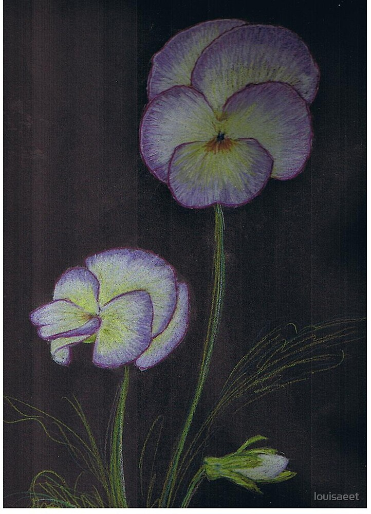 violas  by louisaeet