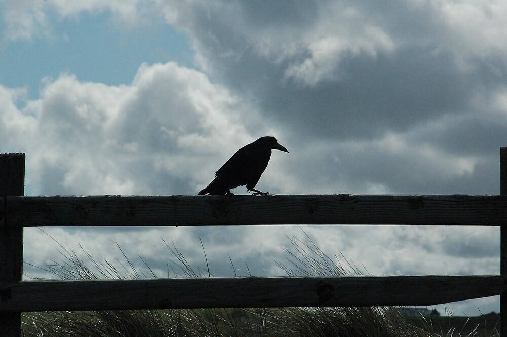 Raven by Ted  van Eck