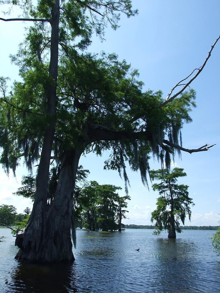 Swamp 12 by Lainey Simon