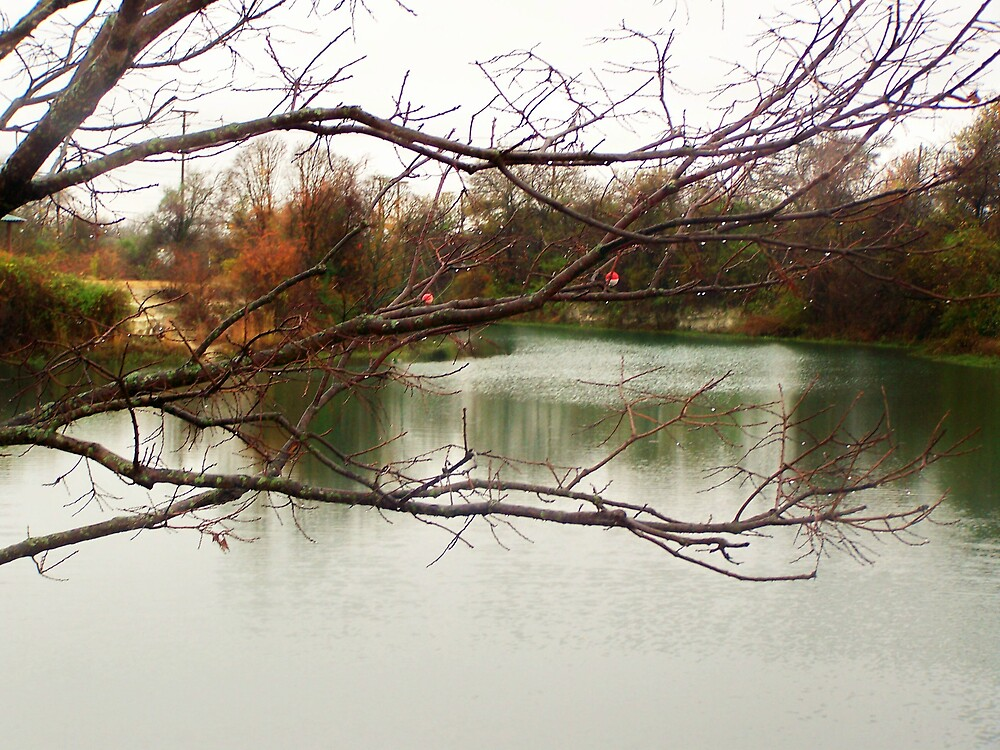 fishing branches by M.  Photography