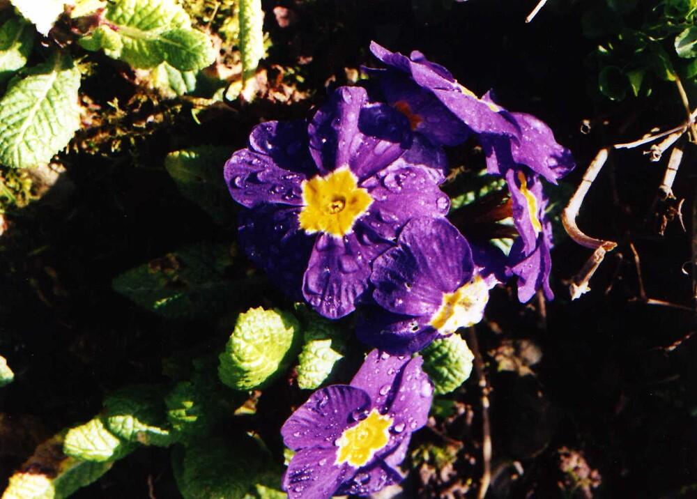 Dewy Flowers by Rachel Harris
